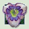Купить лилейник LOVE IS BLUE